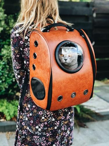 kissa-kantolaukussa-oranssi