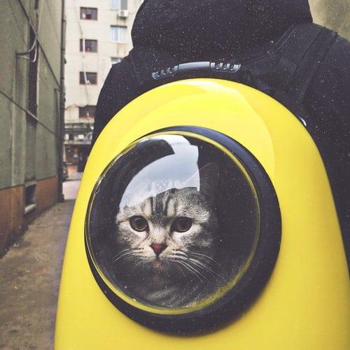 kissa keltaisessa kantolaukussa