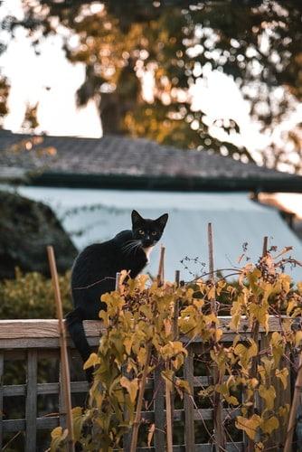 kissa ulkona musta