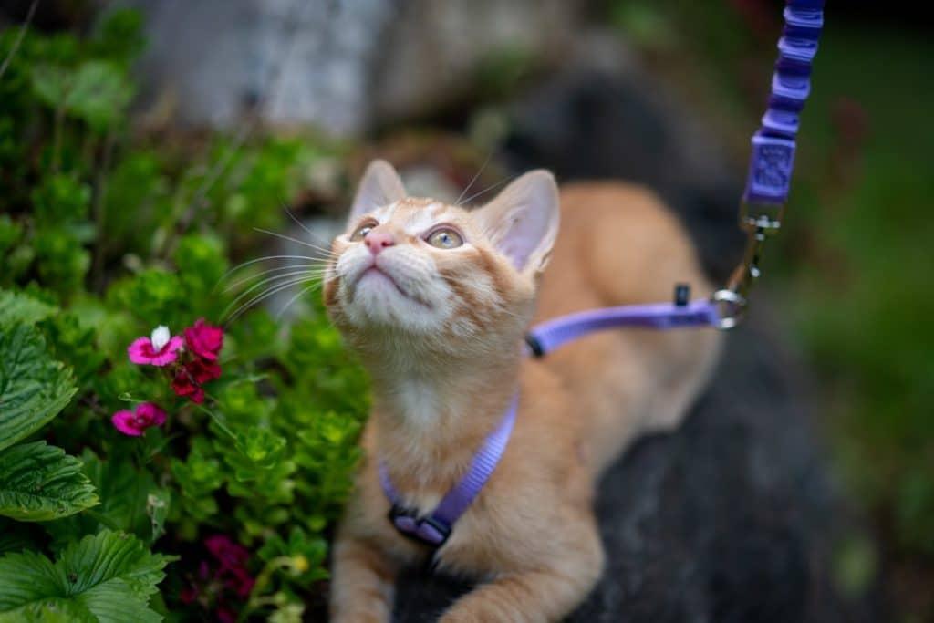 oranssi-kissa-kissan-valjaat