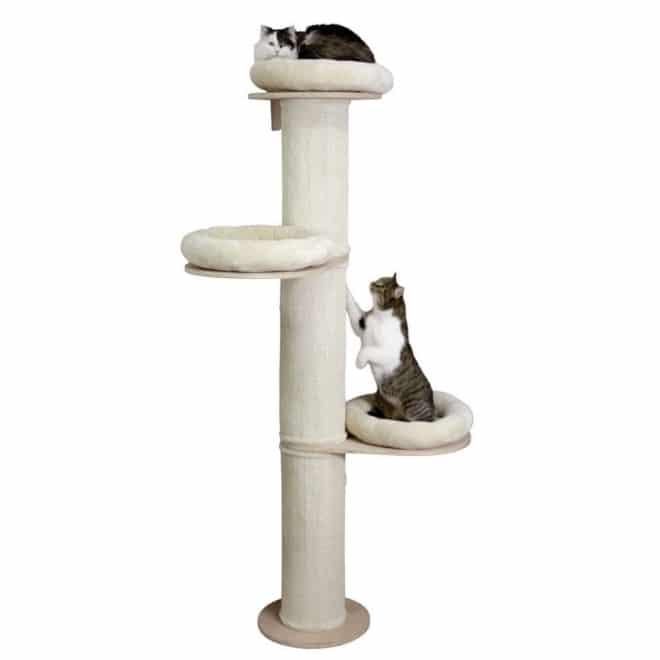 kissan-raapimispuu-dolomit-tower