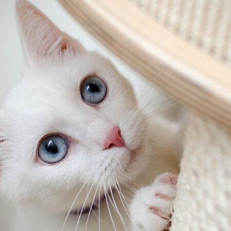 kissan tarvikkeet banner 1