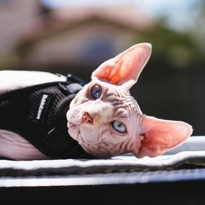 kissan-valjaat