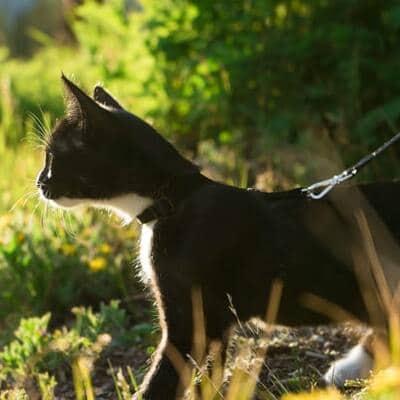 musta-kissa-kissan-valjaat