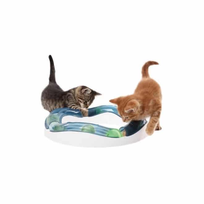 cat-senses-speed-circuit
