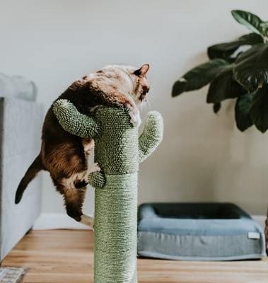 kaktus-kissan-raapimispuu-featured-cropped
