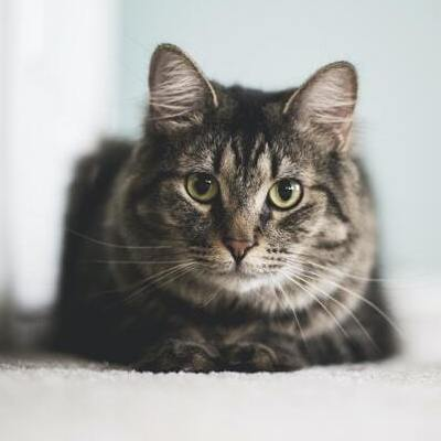 kissan-henkinen-terveys-feature-cropped