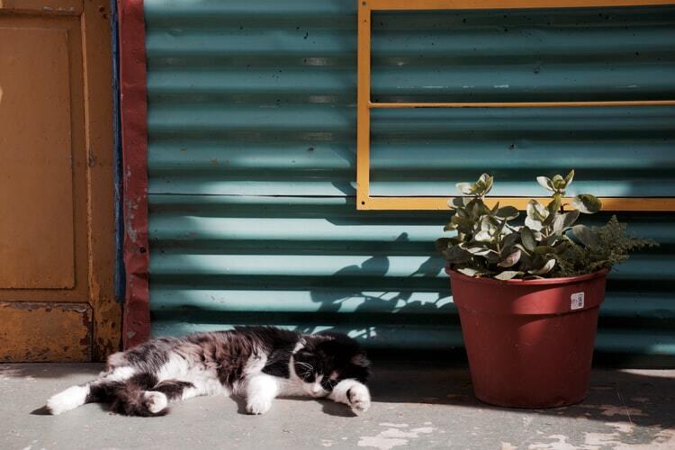 kissan-henkinen-terveys-nukkuva-musta-valkoinen