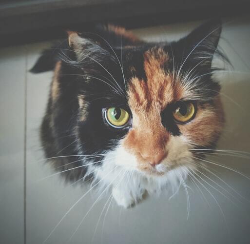 kissan-henkinen-terveys-oranssi-musta