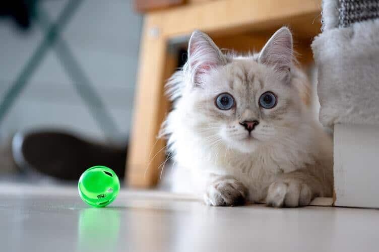kissan-lelu-vihreä