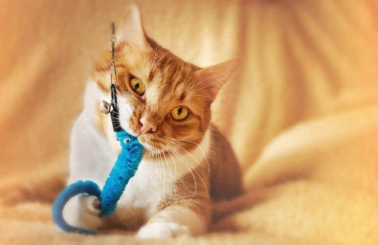 kissan-lelut-sininen