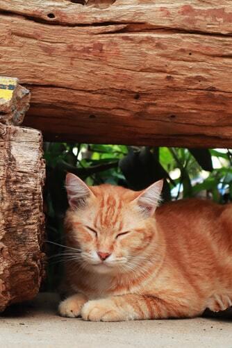kissan-nivelet-oranssi-kiisu