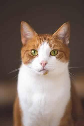 kissan-silmät-oranssi