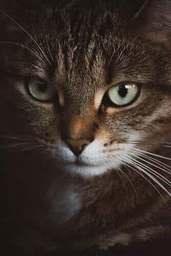 kissan-silmät-ruskea