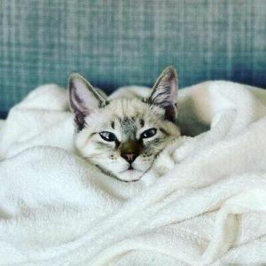 kissan-silmät-valkoinen-featured-cropped