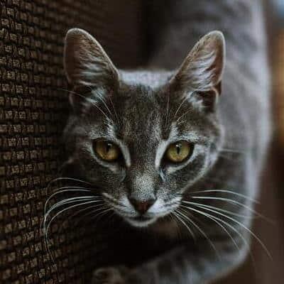 kissan-silmät-vihreä-feature-cropped