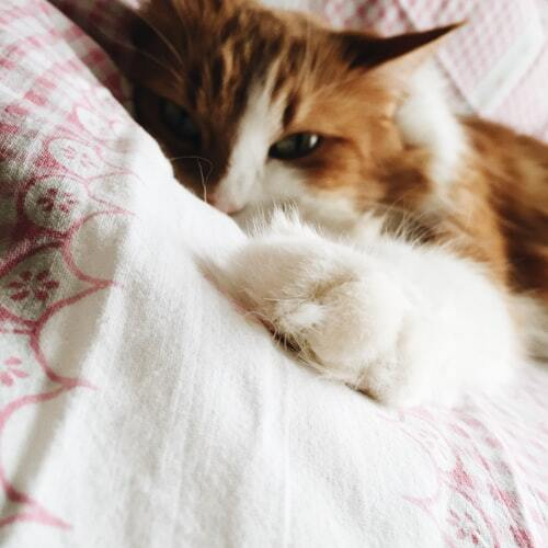 kissan-tassut-ja-kynnet-oranssi