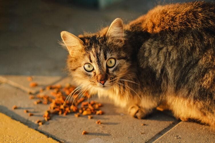kissan-vatsa-ruskea