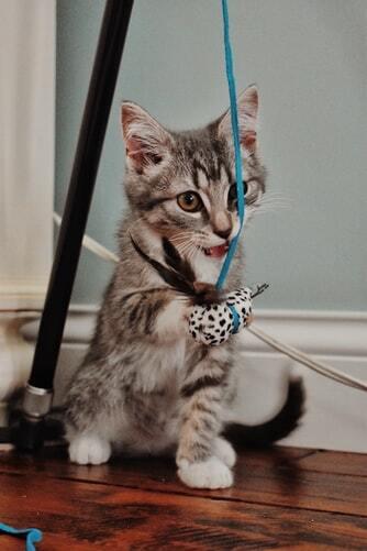 roikkuva-kissan-lelu